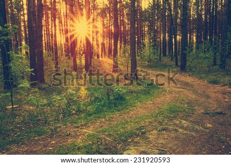 beautiful sunset in the woods, retro filtered, instagram style  - stock photo