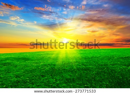 Beautiful sunset on an unfocused green field.  Summer landscape. - stock photo