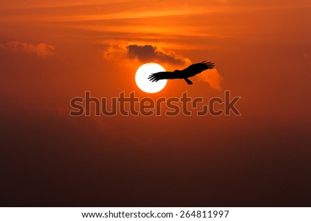 beautiful sunset on the river and Silhouette of eagle flying on sky - stock photo