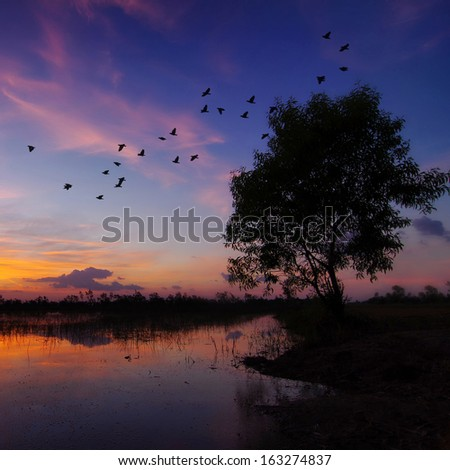 Beautiful sunset over field. Birds are flying back the nest, Concept homing. - stock photo