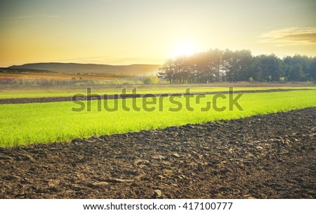Beautiful sunset over the green large field - stock photo