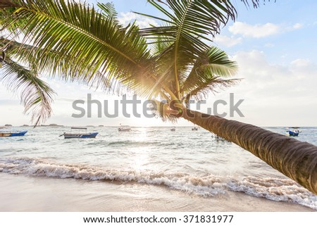Beautiful sunset over the sea with a view at palms on the white beach - stock photo