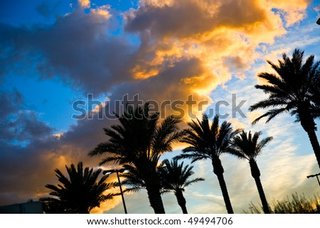 beautiful sunset sky with palm trees - stock photo