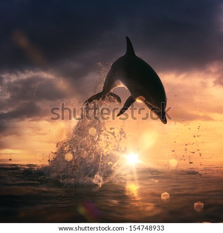Beautiful Sunset time at the sea and playful dolphin leaping water with splashes - stock photo