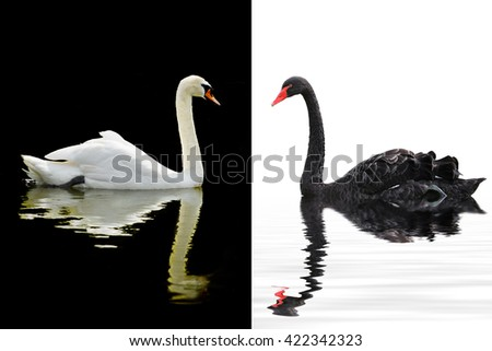 Beautiful swan floating on  calm water of  lake - stock photo