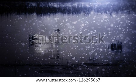 Beautiful swan in snowfall at the lake. - stock photo