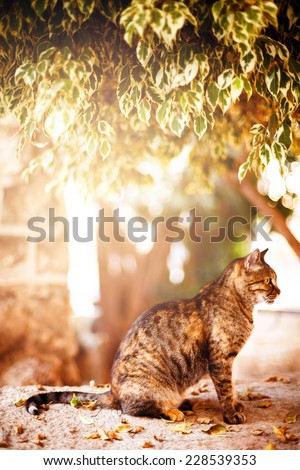 Beautiful tabby cat sitting and resting under the tree in sunset light. Image tones with warm colors. Selective focus.  - stock photo