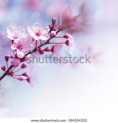 Beautiful tender cheery tree flowers border, blooming nature, first blossom, sunny day, natural border, spring time concept - stock photo