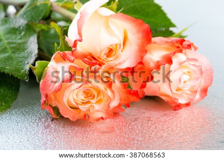 beautiful three orange rose flowers on light background with drops - stock photo