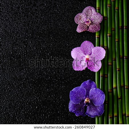 Beautiful three orchid with bamboo grove on wet background - stock photo