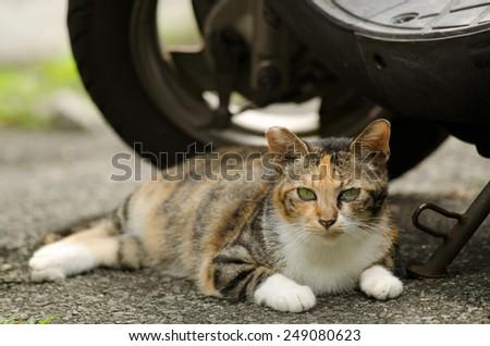 Beautiful tortoiseshell cat sitting on ground near motorcycle in urban. - stock photo