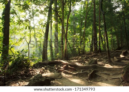 Beautiful trail in the jungle in Erawan National Park, Thailand - stock photo