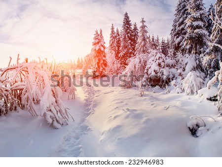 beautiful tree in the snow on a sunny winter day  - stock photo