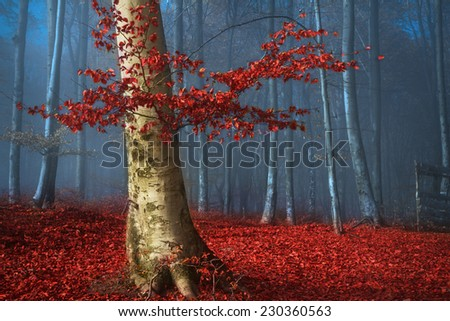 Beautiful tree with red leaves in blue foggy forest during autumn - stock photo