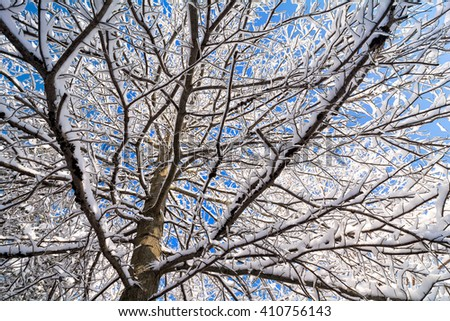 Beautiful tree with snow clinging to the branches against a bright blue sky. - stock photo