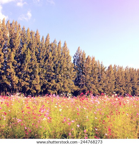 Beautiful trees in flowered field with retro filter effect - stock photo