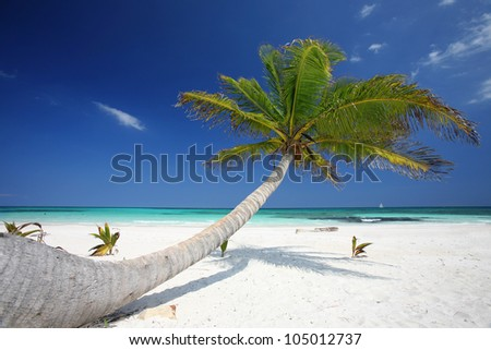 beautiful tropical beach with coconut palm tree, Cancun, Palm tree in tropical perfect beach - stock photo