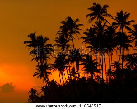 Beautiful tropical sunset on a beach in Sri-Lanka - stock photo