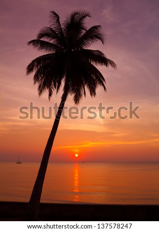 Beautiful tropical sunset with palm tree silhouette - stock photo