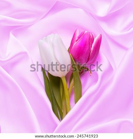 Beautiful Tulips and Silk - stock photo