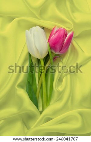 Beautiful Tulips and Silk - stock photo