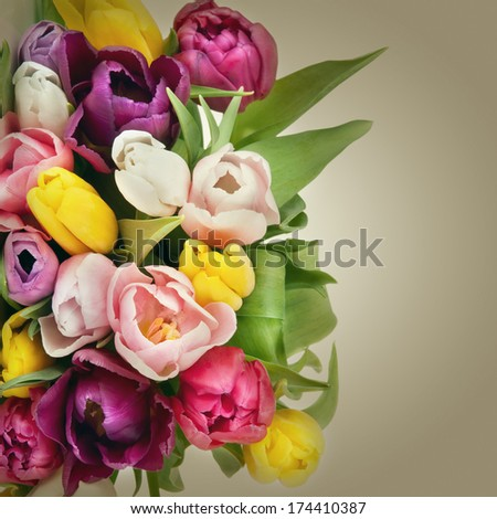 Beautiful tulips bouquet. Spring Flowers - stock photo