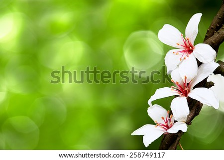 beautiful tung flowers for adv or others purpose use - stock photo