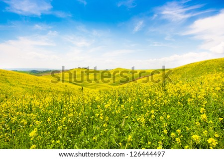 Beautiful Tuscany landscape with field of flowers in Val d'Orcia, Italy - stock photo