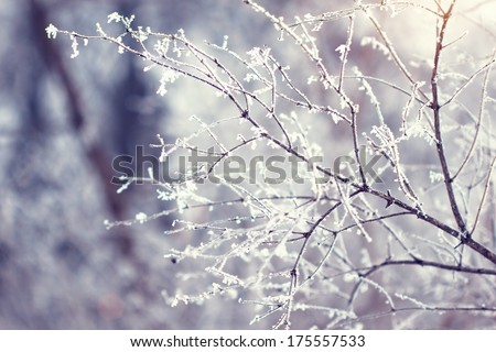 beautiful twigs covered with hoarfrost - stock photo