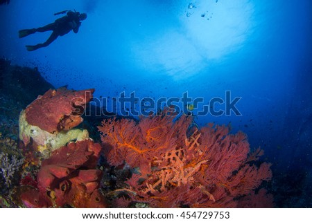 Beautiful underwater landscape with healthy reefs and corals, with silhouettes of divers behind and schooling fishes in shallow water. Indonesia - stock photo