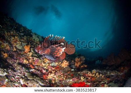 Beautiful underwater view with the lionfish at shallow water at the evening. Nusa Penida, Indonesia.  - stock photo