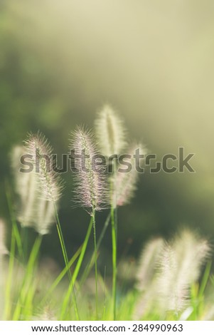 Beautiful vertical background of Hameln grasses - stock photo