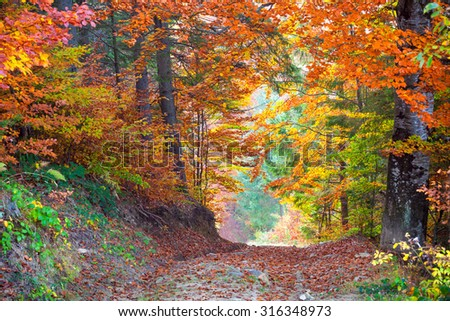 Beautiful vibrant Autumn Fall Leaves colors in forest landscape and road, horizontal - stock photo