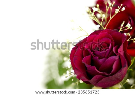 Beautiful vibrant red rose with copy space - stock photo