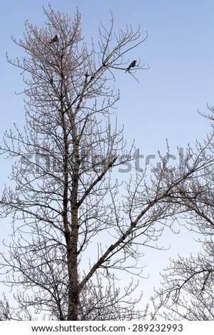 Beautiful view of frozen trees birds - stock photo