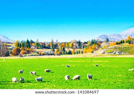 Beautiful view of landscape in New Zealand - stock photo