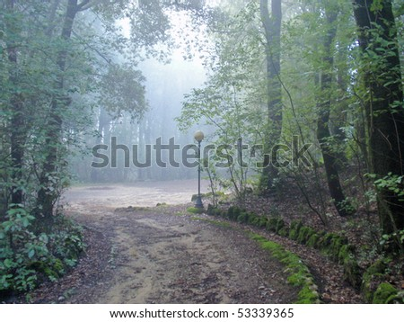 beautiful view of path and forest with early morning fog - stock photo