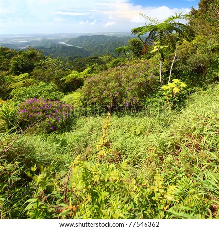 Beautiful view of the lush tropical forests of Puerto Rico - stock photo