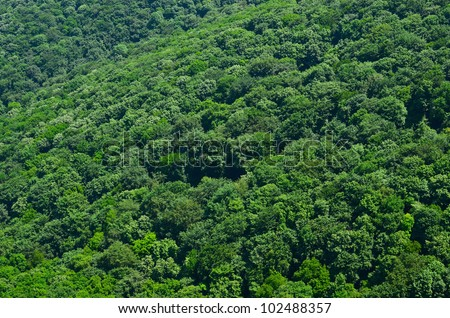 Beautiful view on green forest - stock photo