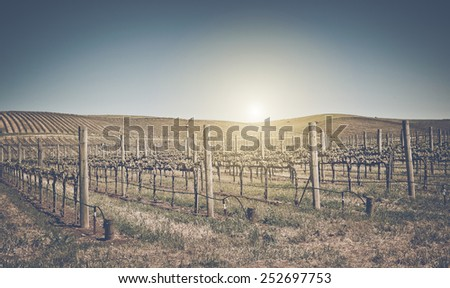 Beautiful Vineyard in Napa Valley with retro Instagram film style filter - stock photo