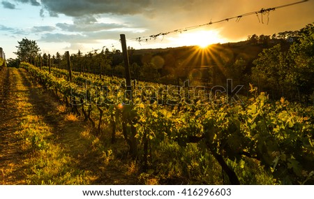 Beautiful vineyard with dramatic sky and rays of setting sun (INTENTIONAL SUN FLARE) - stock photo