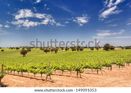 beautiful vineyard with oak in Corral de Almaguer, Toledo, Castilla-La Mancha, Spain - stock photo