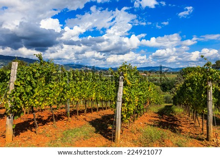 Beautiful vineyards under a dramatic sky in Tuscany, Italy. - stock photo