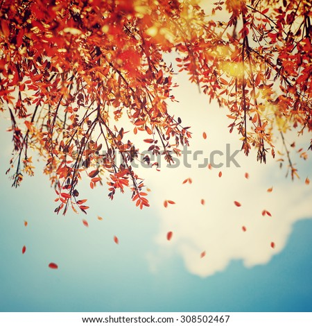 Beautiful vintage autumn background, autumnal tree border with falling down old leaves over blue cloudy sky, abstract natural background, nature at fall - stock photo