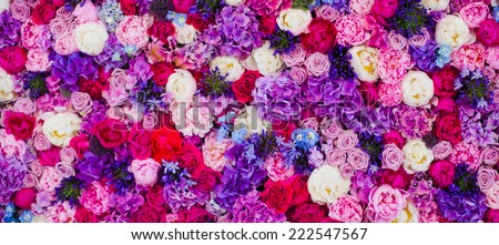 Beautiful wall made of red violet purple flowers, roses, tulips, press-wall, background, valentines day background - stock photo