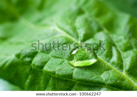 Beautiful water drop on a leaf close-up - stock photo