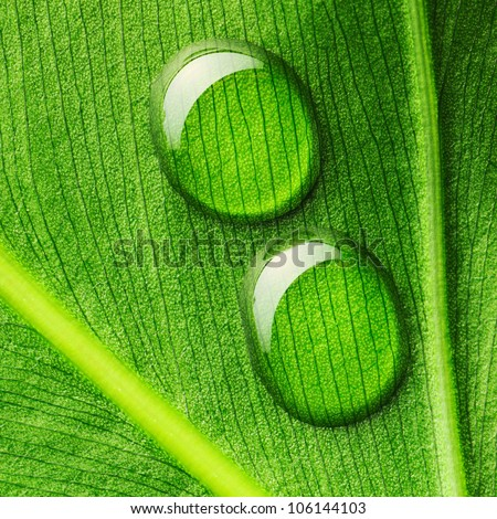 Beautiful water drops on a leaf close-up - stock photo