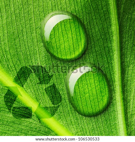 Beautiful water drops on a leaf close-up and recycle logo - stock photo
