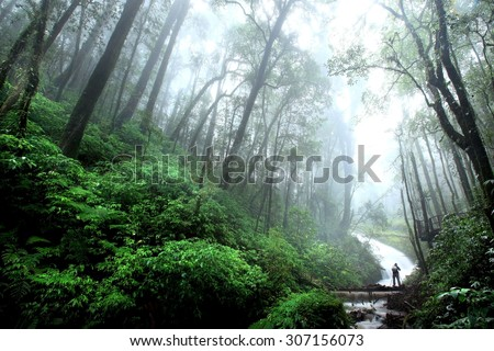 Beautiful Waterfall with fog in rainforest, Chiang Mai, Thailand - stock photo