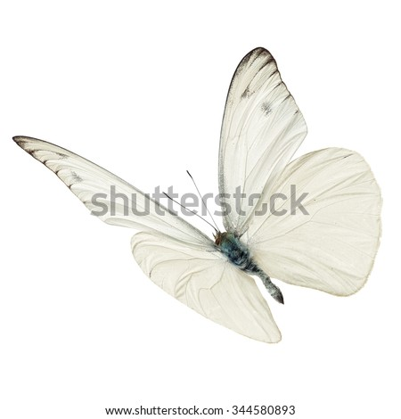 Beautiful white butterfly flying isolated on white background - stock photo